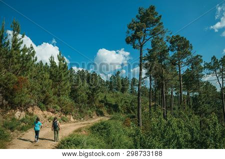 People Hiking On Dirt Road Over Hilly Terrain Covered By Trees