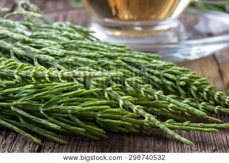 Fresh Horsetail Twigs With Tea In The Background