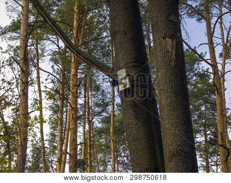Cctv Security Camera Is Mounted On A Tree Trunk In The Forest. The Concept Of Total Control And Cons