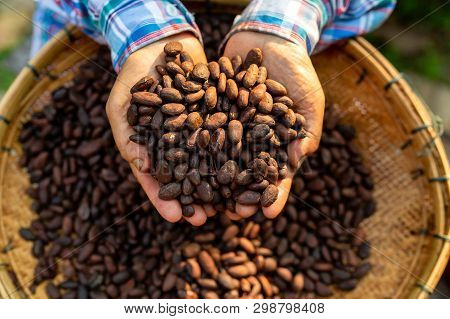 Hands Holding Cocoa Beans, Aromatic Cocoa Beans As Background, Cocoa Beans And Cocoa Fruits On Woode