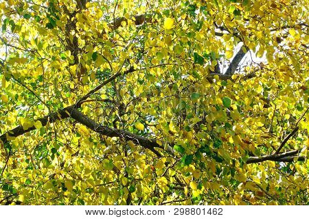 Blur Focus Beautiful Golden Autumn Leaves Yellow Green Plant Nature Backgound