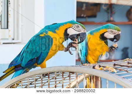 Two Parrots On The Cell In Dominicana