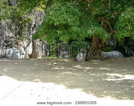 Small Island With Big Tree And Rock