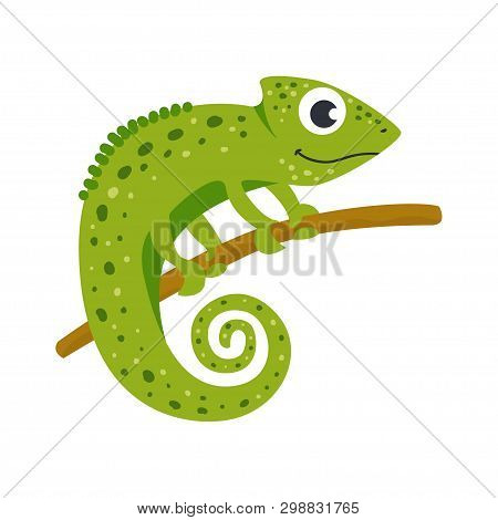 Vector Cute African Animal. Chameleon. Funny Character For Kids.