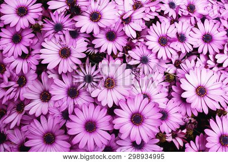 Beautiful Autumn Floral Background For Greeting Or Postcards. Flowers Pink Pattern.