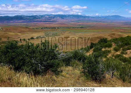 Chaparral Plants On An Arid Grassy Plain At A Rural Hillside Taken In The Antelope Valley, Ca