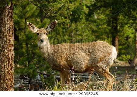 Deer standing in the forest