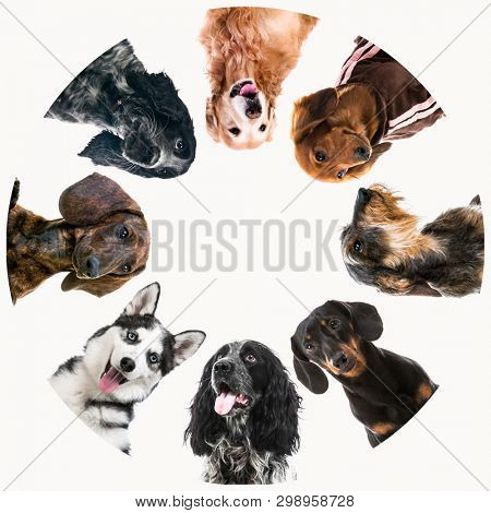 Group of cute fluffy dogs standing in huddle on white background