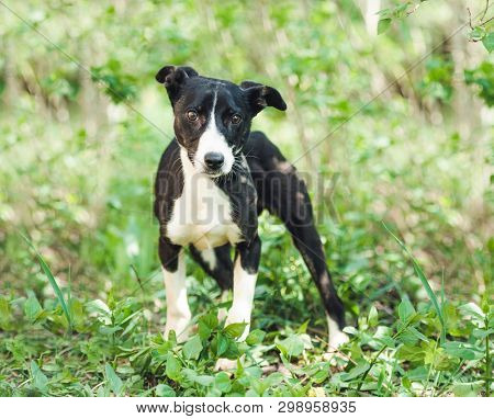 Cute slim doggy is very careful when seeing humans in local garden