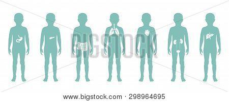 Vector Isolated Illustration Of Child Internal Organs In Boy Body. Stomach, Liver, Intestine, Bladde