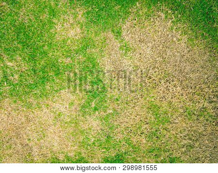 The Lack Of Lawn Care And Maintenance Until The Damage, Pests And Disease Cause Amount Of Damage To