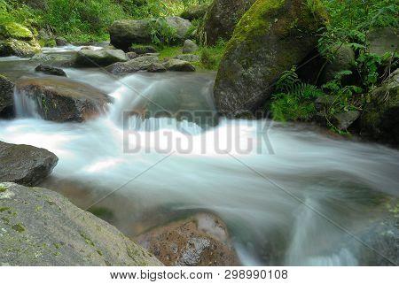 Creek In The Forest. Park Of Desierto De Los Leones. Mexico.