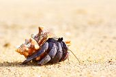 hermit crab on a beach in Andaman Sea poster