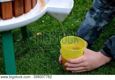 Making Homemade Cider Juice From Fallen Apples Pressing In A Hand Press With A Screw Children Help T
