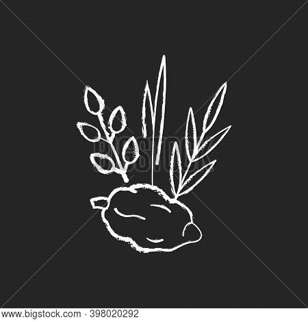 Four Species Chalk White Icon On Black Background. Jewish Holiday. Etrog, Lulav, Hadas, Arava. Sukko