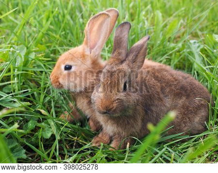 Two Rabbits. Portrait Of Animals In Nature