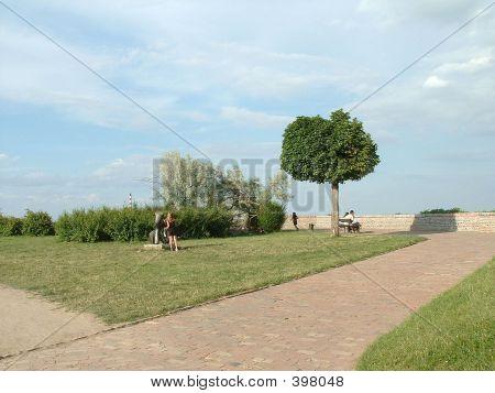 Very Interesting Tree