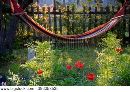 Hammock With Colorful Stripes Hanging In The Morning Sun Among The Apple Trees Below It Blooms Bee M
