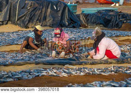 Negombo, Sri Lanka - February 03, 2020: Three Sri Lankans Lay Out The Fish To Dry On A Sunny Morning