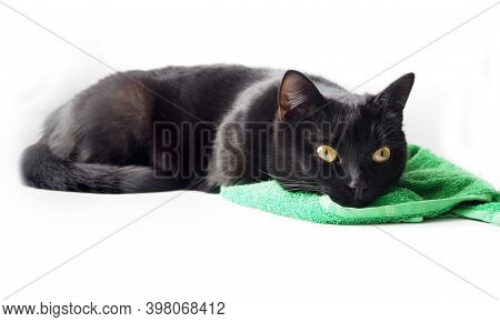 Black Cat Sleeping On A Green Towel.