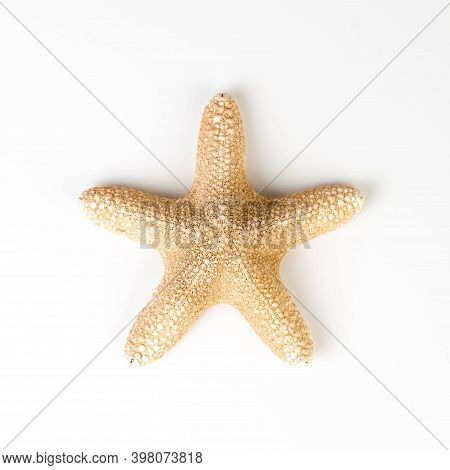 A Starfish Isolated On A White Background, Big Starfish