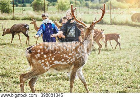 Russia, Izhevsk, September 12 2020: Sika Deers On A Reindeer Farm. Group Of Schoolchildren Feeding D