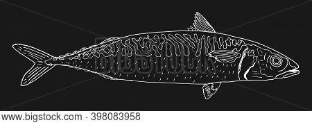 Mackerel Fish Hand Drawn. Contour Of Mackerel On Black Background. Seafood Design Element. Vector Il