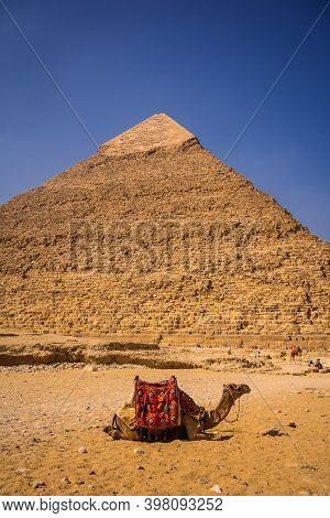 A Beautiful Camel Sitting On The Pyramid Of Khafre. The Pyramids Of Giza The Oldest Funerary Monumen