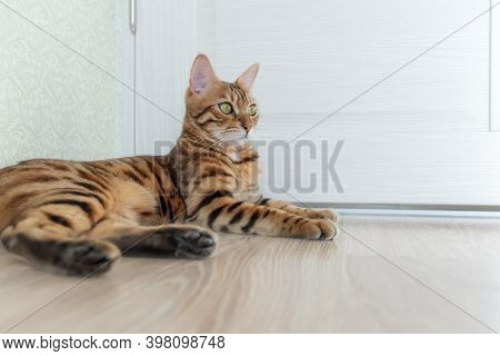 Photo Of A Bengal Shorthair Cat With Big Eyes.