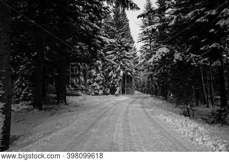 Idylic Winter Road In The Forest / Cold Winter Day / Winter