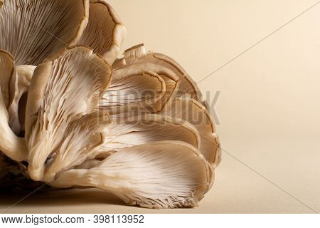 An Overlapping Oyster Mushrooms With Their Fleshy Gills And Rudimentary Stipes On A Light Ocher Back