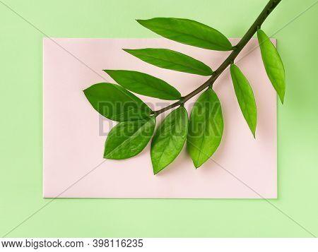 Fresh Green Stem Of Eternity Zuzu Plant Or Zamioculcas Zamiifolia On A Pastel Pink Paper Card Over G