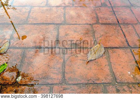 Stamped Concrete Pavement, Waterproof Outer Cement Coating Wet Water Slate Stone Tile Pattern, Decor