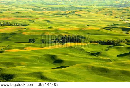 View of sprawling wheat fields from Steptoe butte in Palouse, Washington