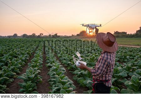 Farmer Preparing To Fly Drones To Survey Areas Of The Tobacco Plantation Young Green Tobacco Plant I