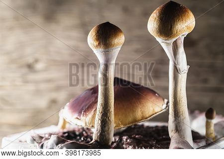 The Mexican Magic Mushroom Is A Psilocybe Cubensis, Whose Main Active Elements Are Psilocybin And Ps
