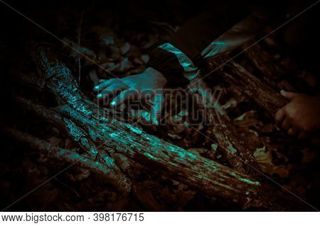 Zombie Hands Crawling Through The Creepy Thickets Of Trees, Gnarled Roots And Driftwood In A Dark Ho