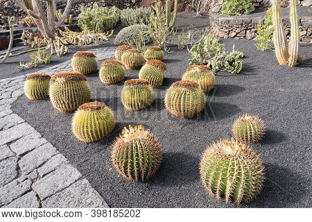 Lanzarote, Spain - August 7,2018:strolling Inside The Famous Cactus Garden In Lanzarote During A Clo