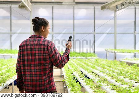 Young Man Asian Farmer Using Smartphone In Vegetable Hydroponics Farm