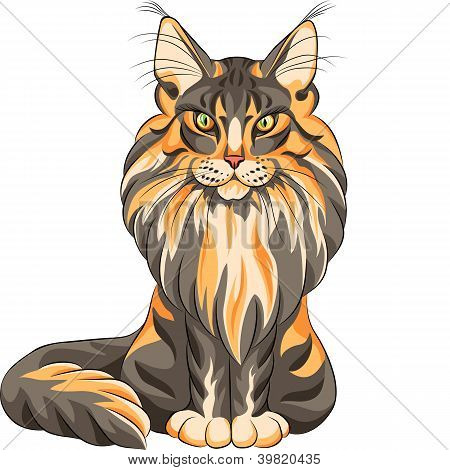 Vector color sketch serios black and red fluffy Maine Coon (American Longhair) cat sitting poster