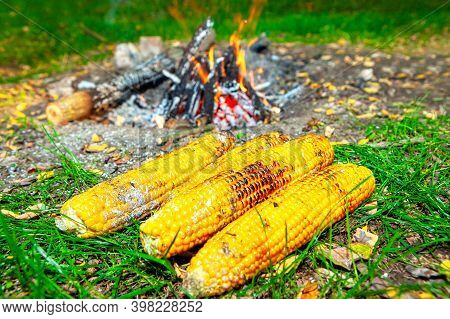 Baked Corn On Embers . Vegan Picnic With Sweetcorns