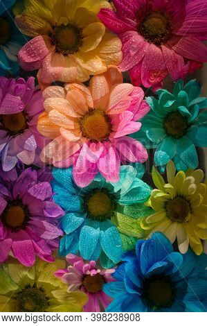 Colourful Multi Coloured Flower Heads Dyed For The Bouquet Markets And Gift Shops