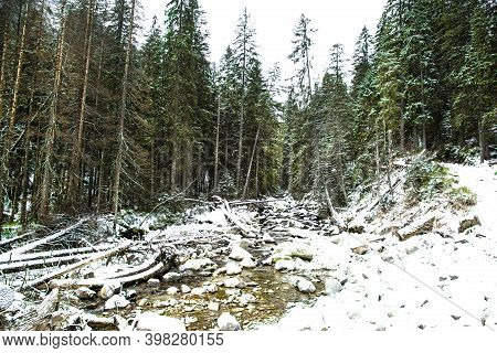 Beautiful Winter Forest And River With Big Stones, Covered With Snow.