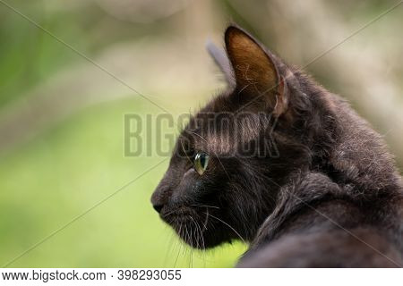 Cute Cat On Full Alert To The Surroundings, Head Turns Side As Watchful Eyes Close Up Photograph Fro