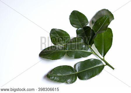 Fresh Green Kaffir Lime Leaves On A White Background