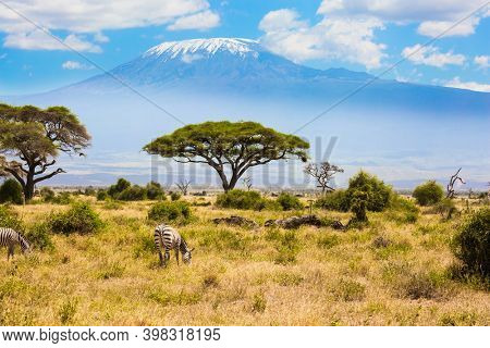 Pair of zebras graze at the foot of Kilimanjaro. Trip to the Horn of Africa. The African savannah. Amboseli is a biosphere reserve by UNESCO. Southeast Kenya, the Amboseli park