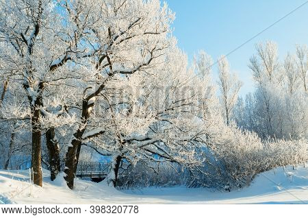 Christmas morning in the forest. Winter Christmas landscape, snowy winter trees covered with ice and frost in sunny day. Wonderland Christmas winter forest with snowfall over trees