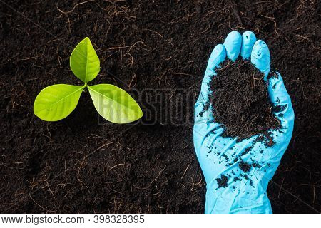 Hand Of Researcher Woman Wear Rubber Gloves Holding Compost Fertile Black Soil For Growing And Nurtu