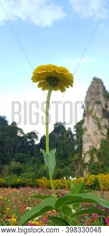 A Beautiful Flower In Front Of The Phu Thap Berk Mountains Of Winter During Summer.