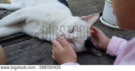 Hand Playing With Cat By Chin Scratching, Pet At Home. The Cat Is Sleeping On The Carpet